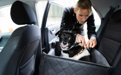 Must-Have Pet Accessories For Your Car